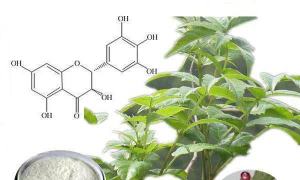 Dihydromyricetin powder